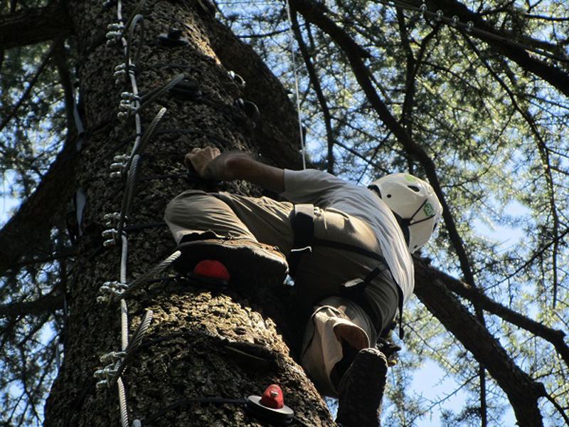 salire sugli alberi salice terme