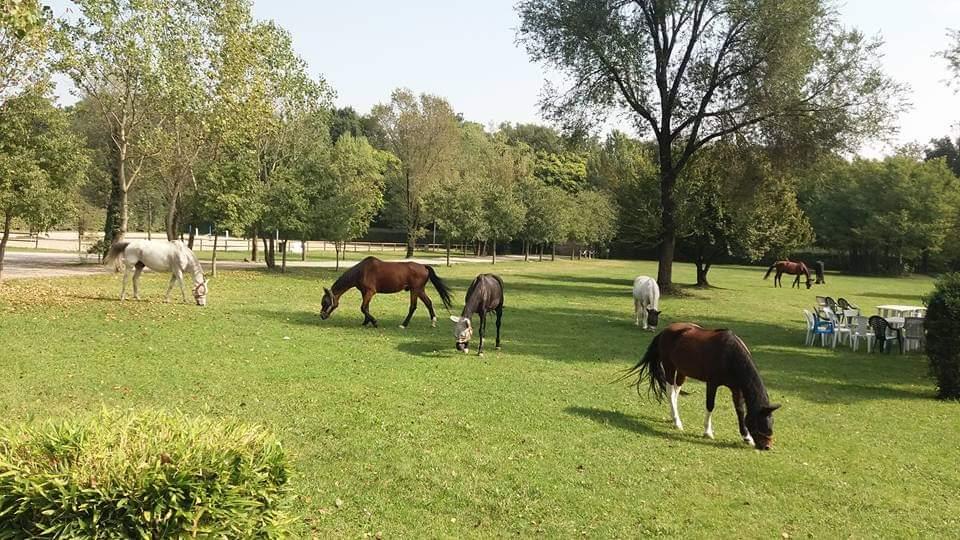 divertirsi con i cavalli