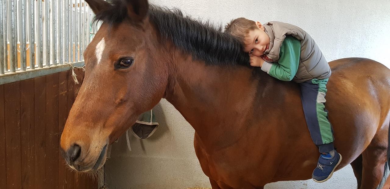 scuderia val fregia cavalli