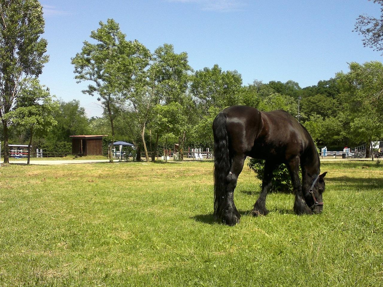 equitazione scuderia val fregia