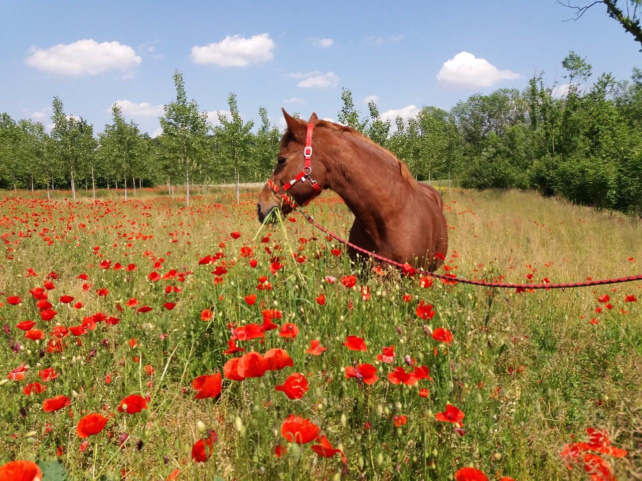 Fattoria con pony e cavalli